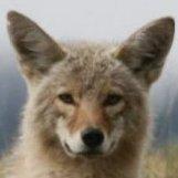 Shaman Coyote