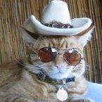 Kismet Cowboy